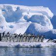 Pingüino Emperador, Antártida Argentina