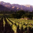Vineyard, Province of Salta